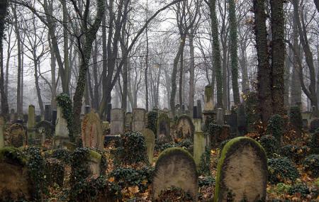 Nowy Cmentarz Zydowski Image