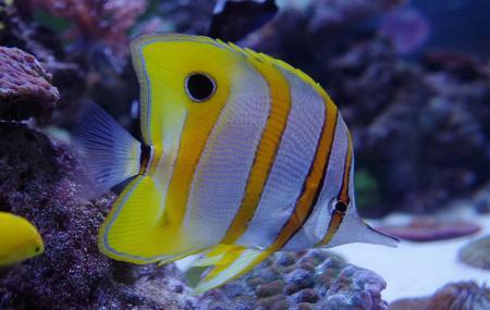 The Aquarium Of The Pacific Image