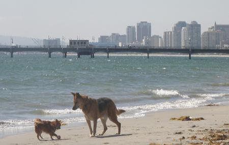 Rosie's Dog Beach Image
