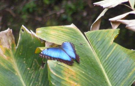 Monteverde Butterfly Garden Image
