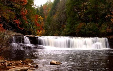 Dupont State Forest Image
