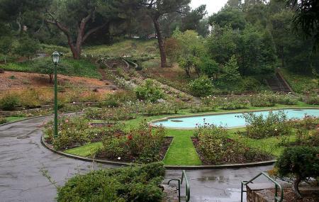 Morcom Rose Garden Image