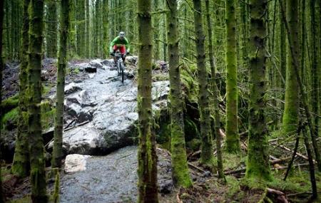 Davagh Forest Trails - Mtb Trailhead Image