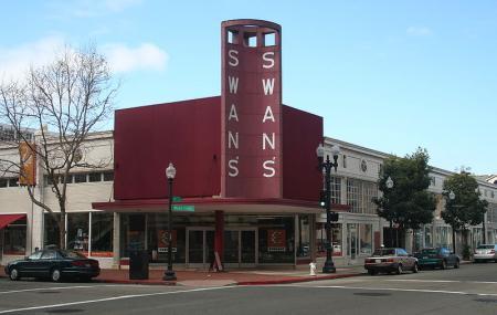 Swans Market Image
