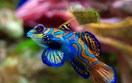 Guernsey Aquarium Image
