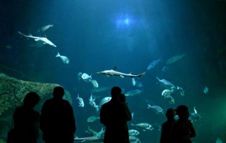 L'aquashow Image