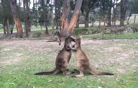 Ballarat Wildlife Park Image