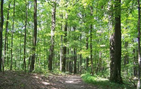Hoosier National Forest Image