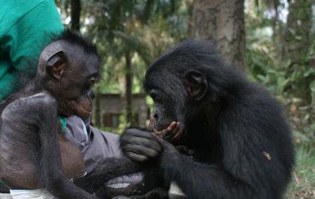 Lola Ya Bonobo Image