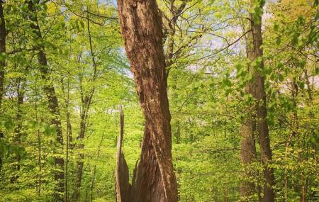Tiffany Creek Preserve Image