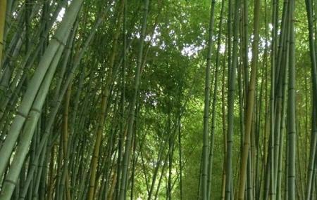 Bambousaie De La Roque-gageac Image