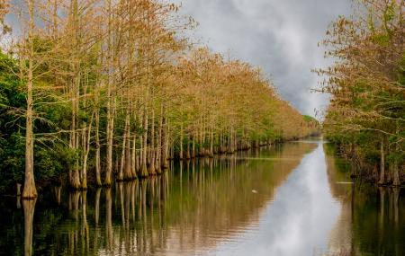 Grassy Waters Preserve Image