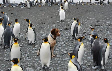 Oamaru Blue Penguin Colony Image