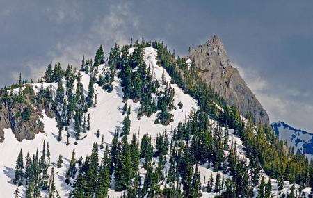 Hurricane Ridge Image