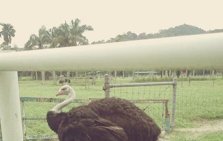 Jelita Ostrich Farm Image