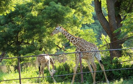 Indira Gandhi Zoological Park Image