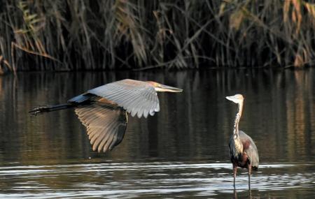 Korsman Bird Sanctuary Image