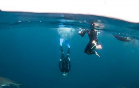 Umkomaas Lodge Dive Charter Image
