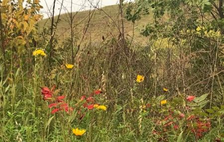 Loess Hills State Forest Image