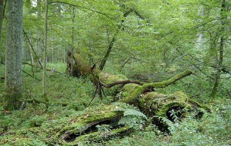Bialowieski Park Narodowy Image