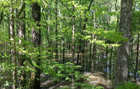 Cheatham Wildlife Management Area Image