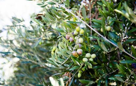 California Olive Ranch Image