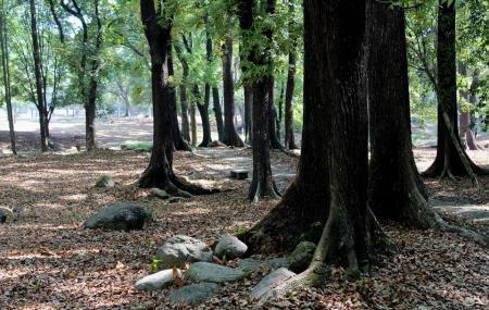 Kebun Raya Purwodadi Image