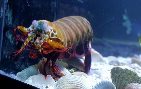 Aquarium D'amneville Image