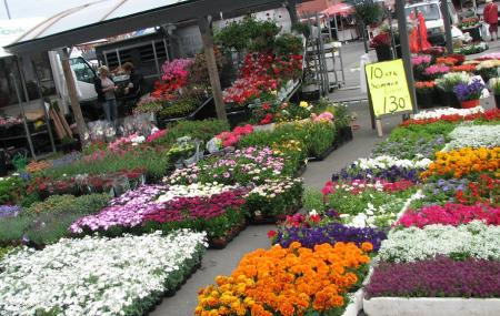 Fish And Flower Market Image