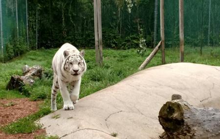 York's Wild Kingdom Zoo And Fun Park Image