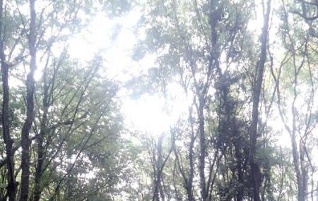 Parcul National Cheile Nerei - Beusnita Image