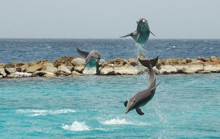 Seaquarium Curacao Image