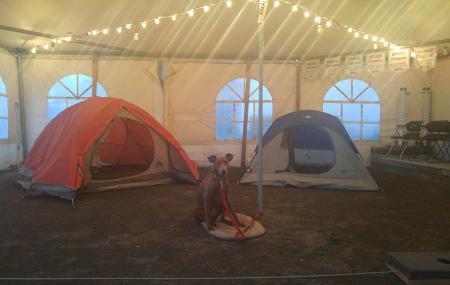 Camping Parasol Image