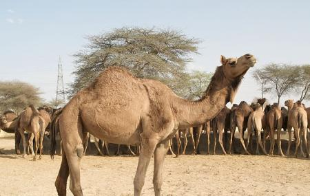Camel-breeding Farm Image