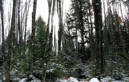 Nicolet National Forest Image
