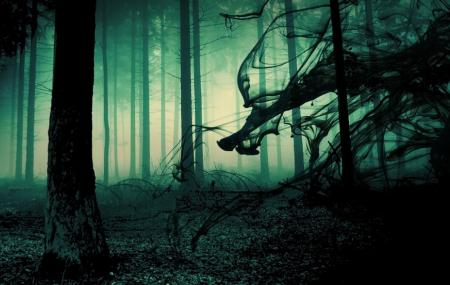 Dead Woods Haunted Forest Image