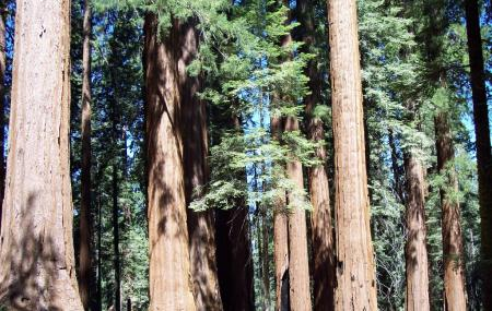 Sequoia National Forest And Giant Sequoia National Monument Image
