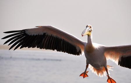 Pelican Point Kayaking Image