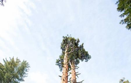 Tahoe Treetop Adventure Park Image