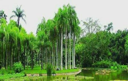 Bogor Botanical Gardens Image