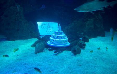 Fakieh Aquarium Image