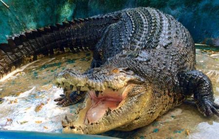Davao Crocodile Park Image