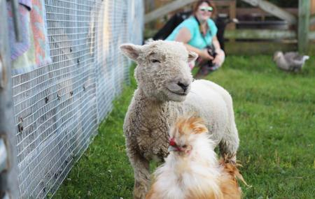 Lambs Farm Image