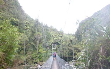 Kaimai Mamaku Forest Park Image