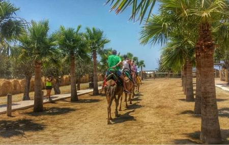 Camel Park Image