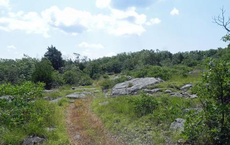 Buford Mountain Conservation Area Image