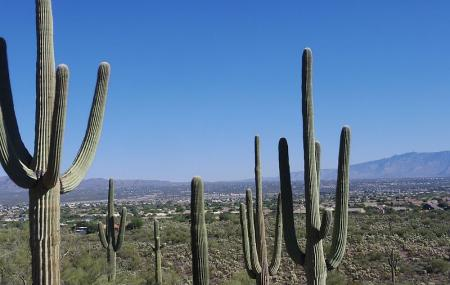 Saguaro National Park Image