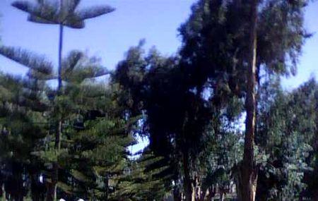 Selva Alegre Park Image