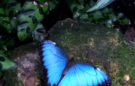 Butterfly Rainforest At The Florida Museum Of Natural History Image