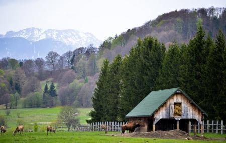 Valea Zimbrilor Image